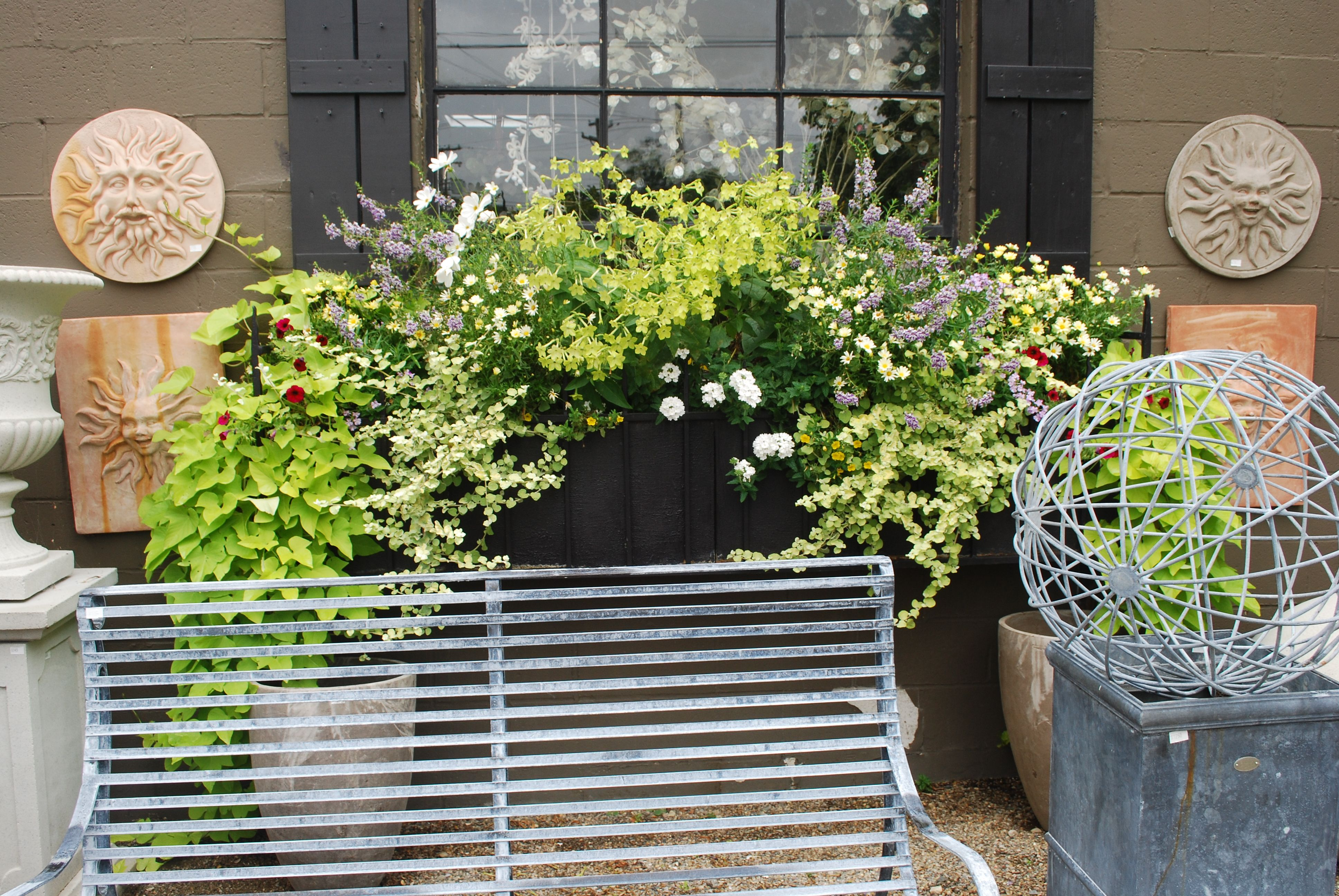 Window Box With Lime Nicotiana Window Box Window Boxes Outdoor Living
