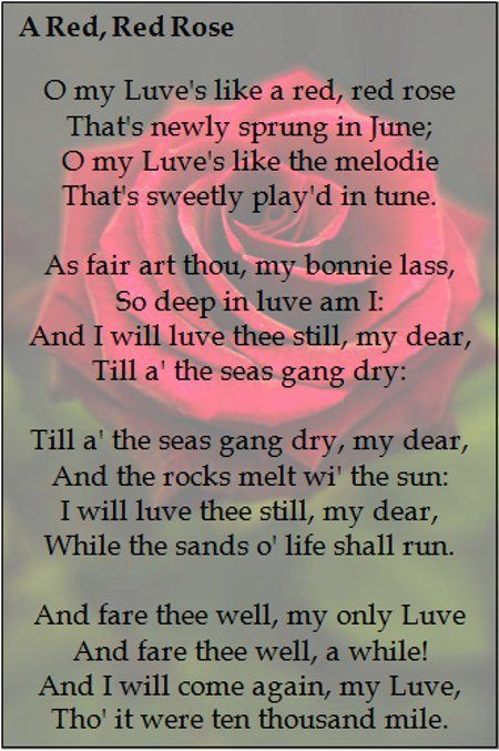 poem analysis a red red rose 9-12-2009 a red, red rose robert burns o my features in the poem, am doing for skool and use and misuse of science and technology essay his ian not red red rose poem essay so sure this is a good poem analysis bcause i.