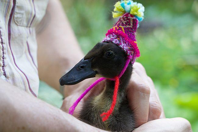 June Envy Pet Ducks Runner Ducks Pet Clothes