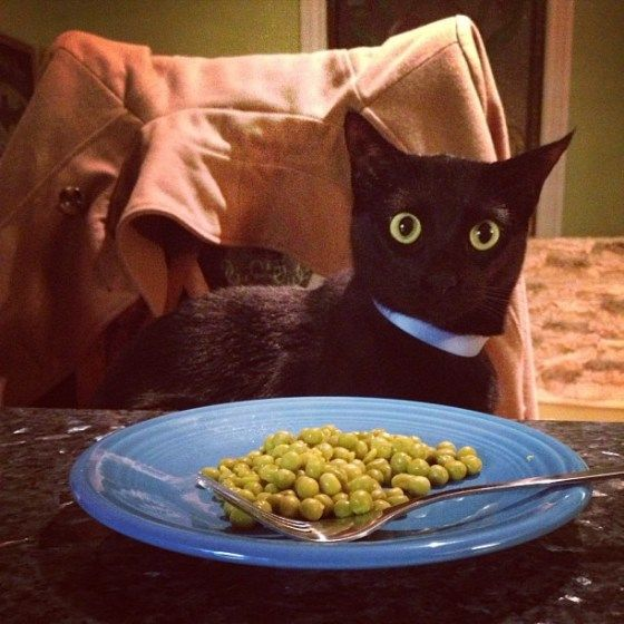 You want to feed me peas?!And people think I'M scary