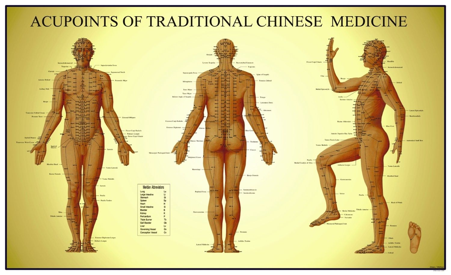 Curious about acupressure take a look at this great beginners curious about acupressure take a look at this great beginners guide http ccuart Gallery