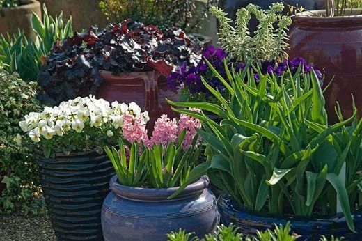 Planting in containers is a great way to create displays that you