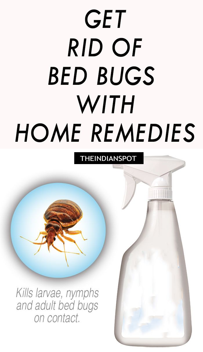 Household Remedy Remedies Rid Of Bed Bugs Bed Bug
