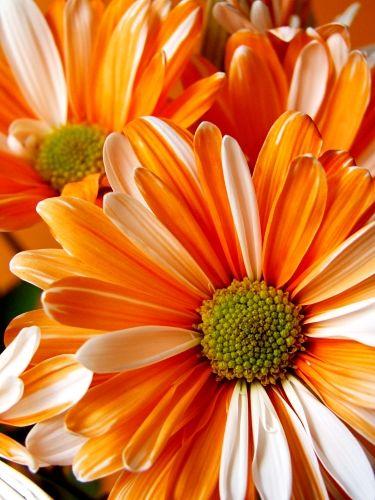 Log In Planting Flowers Beautiful Blooms Love Flowers