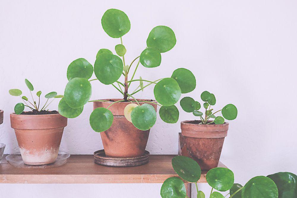 pil a family plantes jardinage et boutures. Black Bedroom Furniture Sets. Home Design Ideas