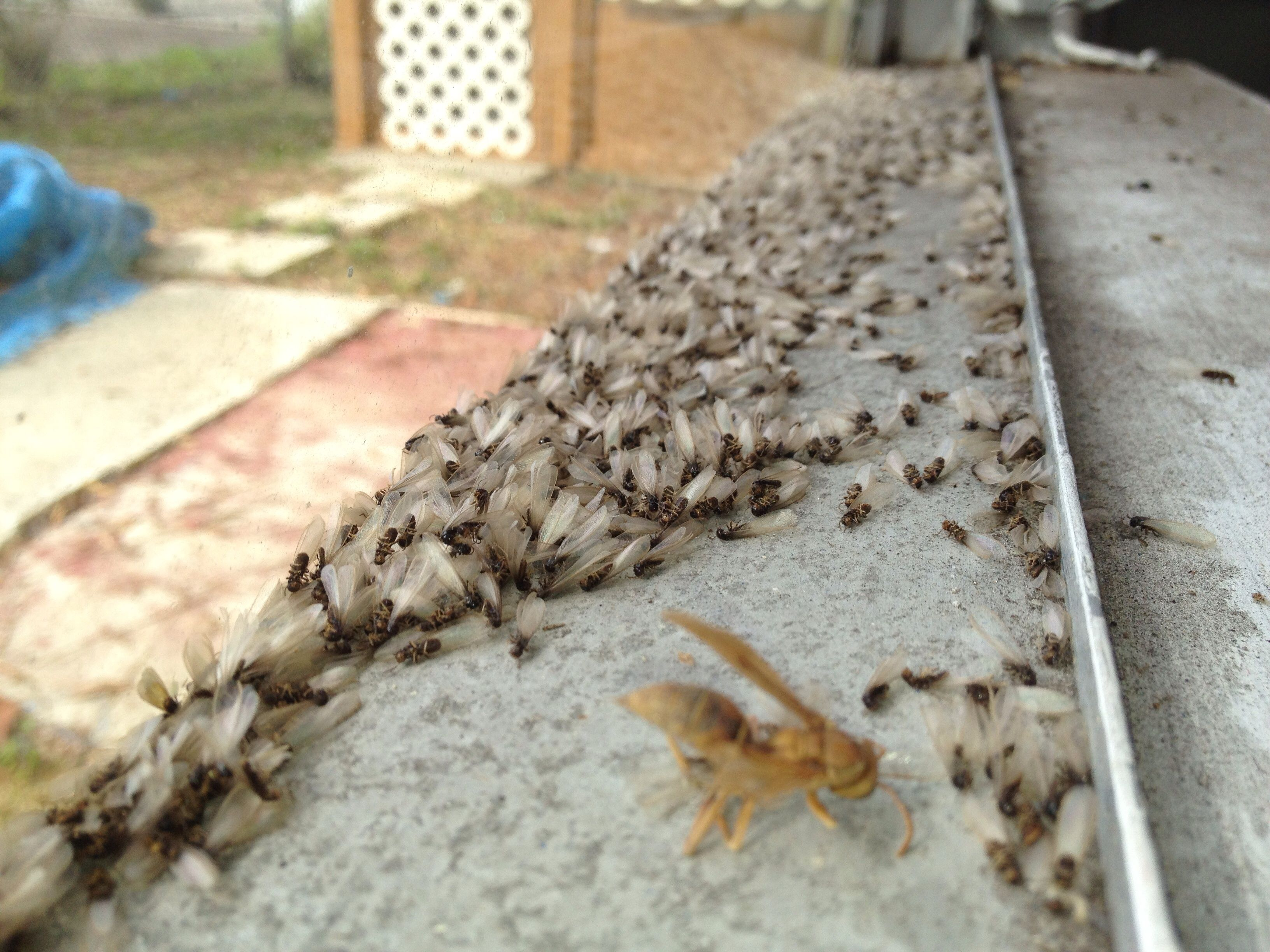Pest Control Services Tampa Termite Exterminating Company