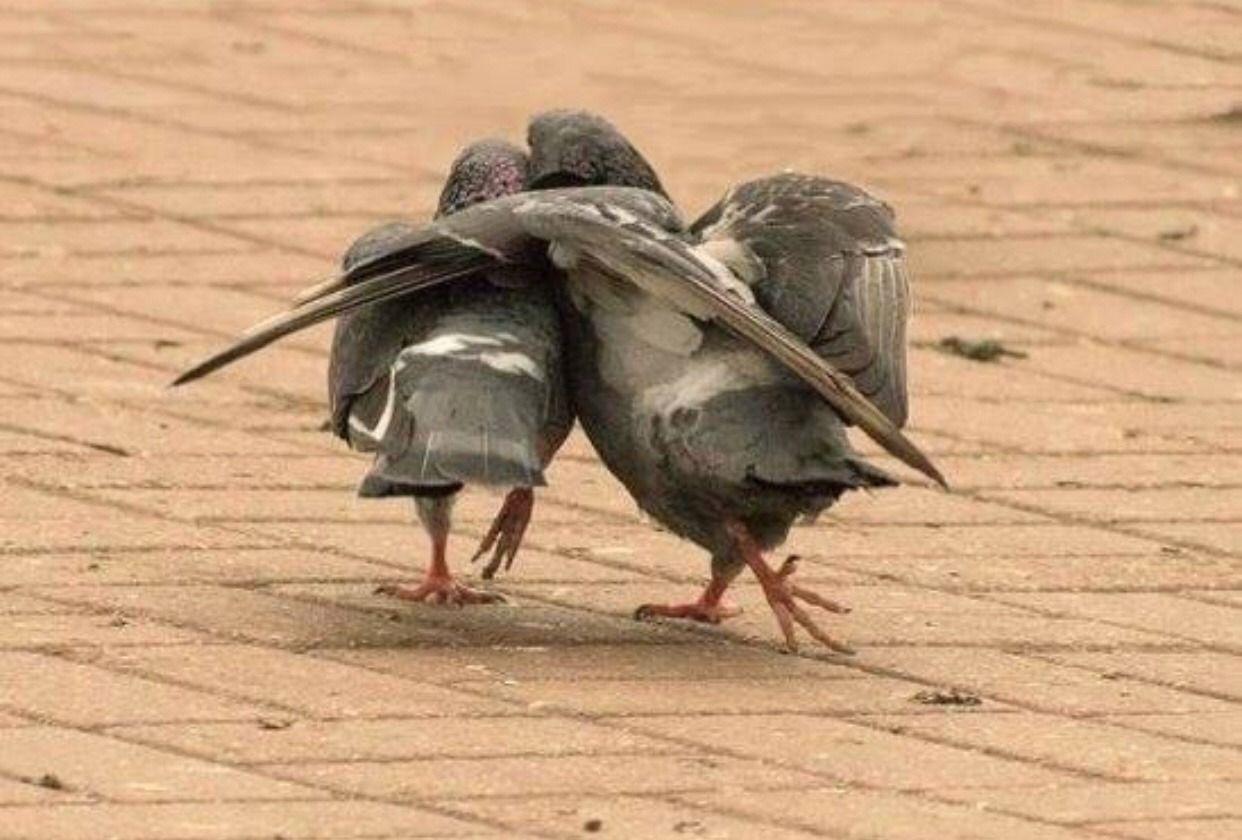 Pin by gggo r on bird | Funny birds, Animals beautiful ...
