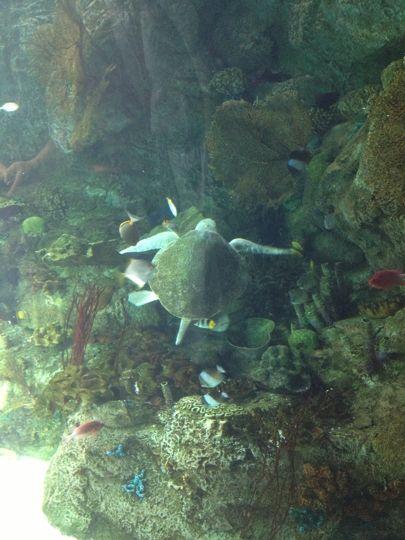Marine Life Education Field Trips: School-Age Kids in LA - Trekaroo