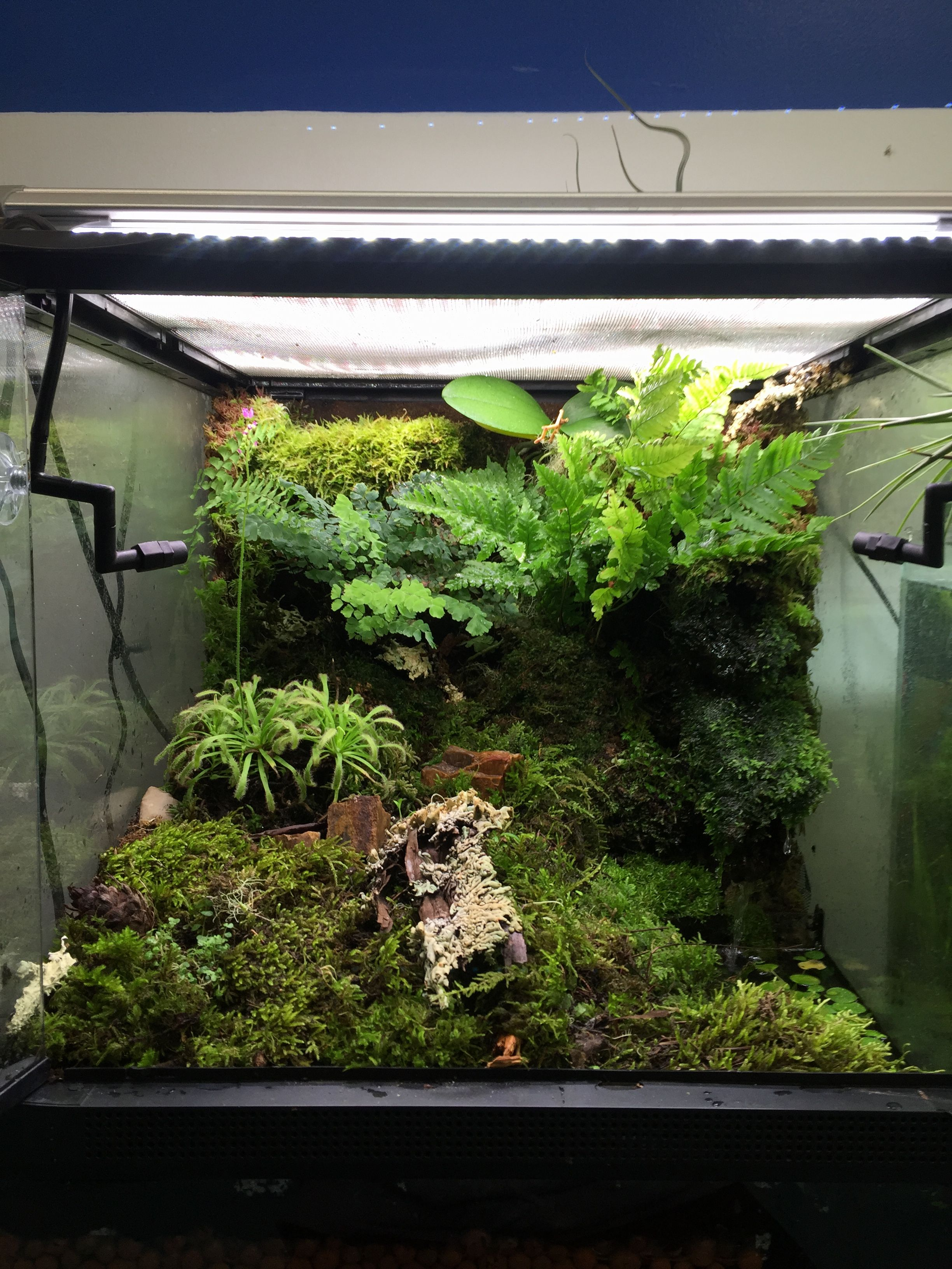 Terrarium Plants Dart Frog Things I Ve Made Vivarium Reptile