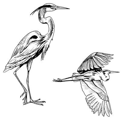 Blueheron Gif Bird Drawings Heron Tattoo Heron