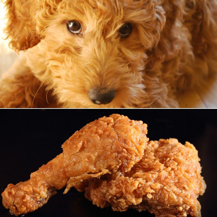 Labradoodle Or Fried Chicken All Things Pets