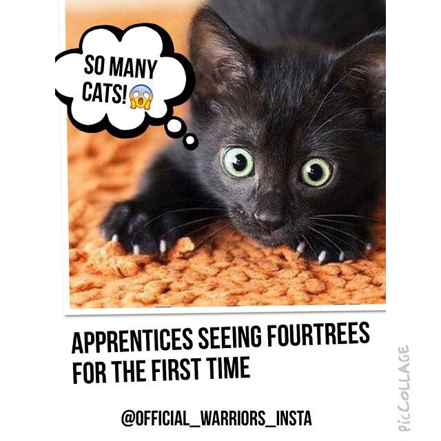 Apprentices Warrior Cats Untold Tales: Apprentices Seeing Fourtrees For The First Time