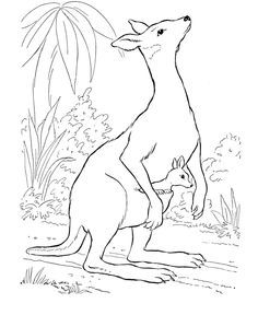 Wild Animal Coloring Page Cute Baby Kangaroo Coloring Page