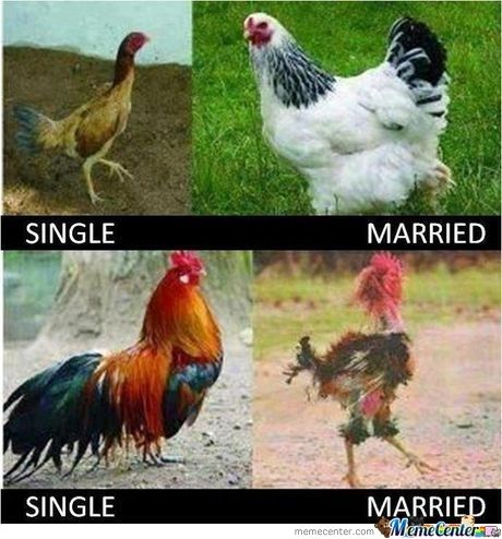 Hen And Rooster After Marriage Funny Mom Quotes Funny Facebook Status Funny Pictures