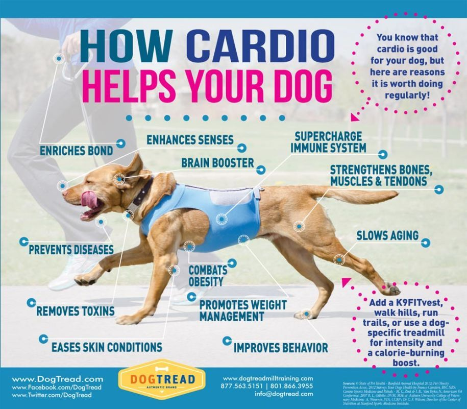 Cardio Can Benefit Your Dog In So Many Ways See All Of The