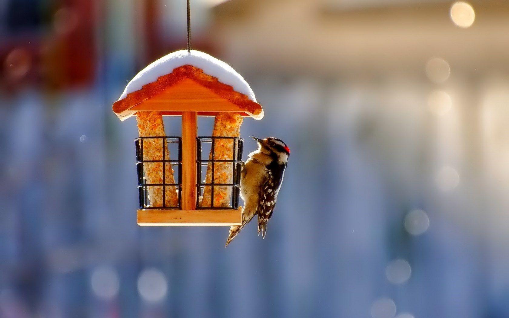 Birdhouse Bird Winter Snow Nature By Tina Haxhia On 500px Birds Bird Wallpaper Birds Wallpaper Hd