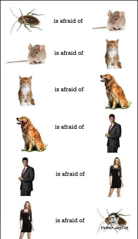 Hahaha, OMG look at this the circle of fear