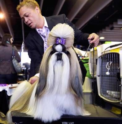 Westminster Kennel Club Dog Show Westminster Dog Show Dog Show