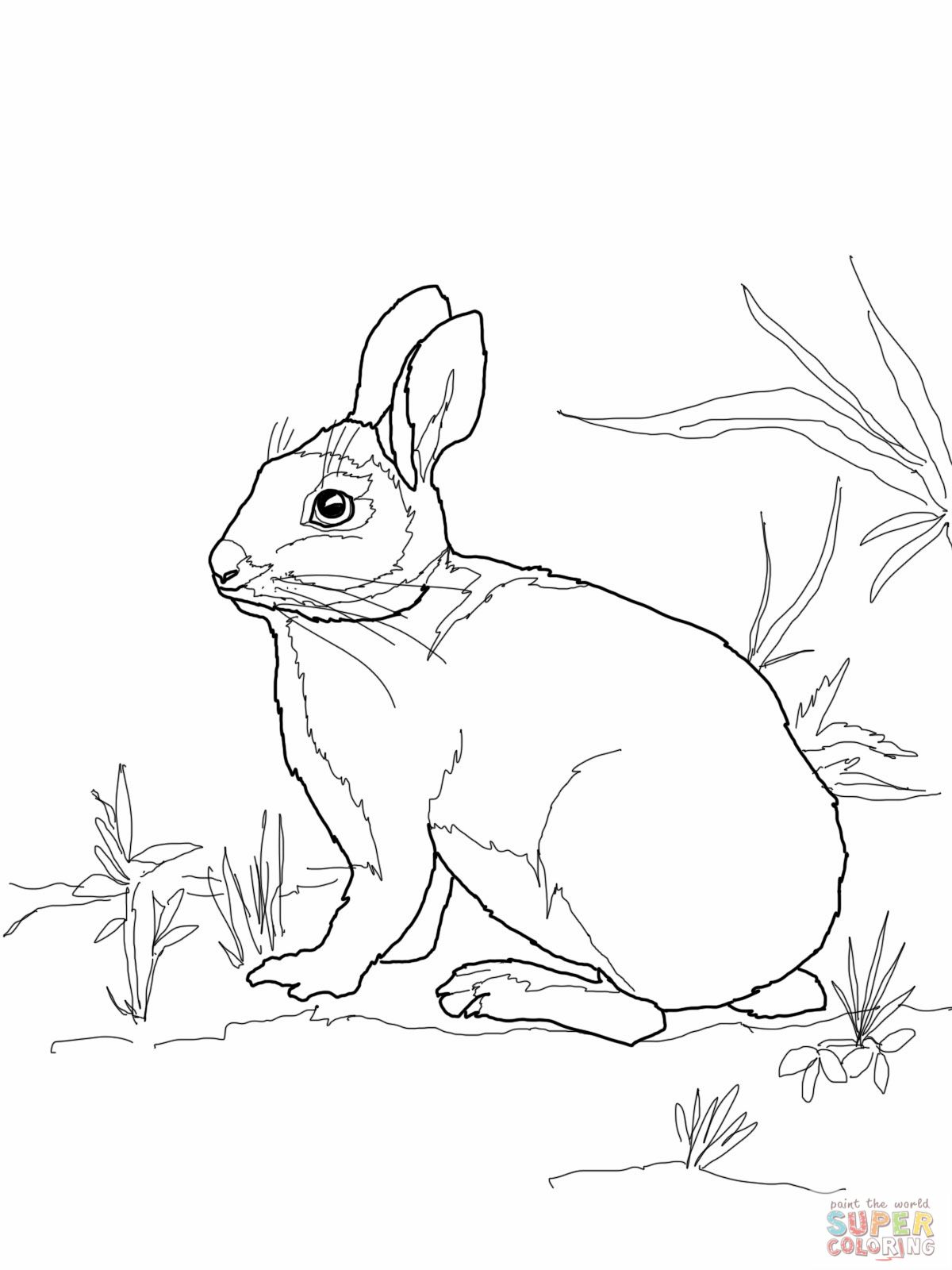 Cottontail Marsh Rabbit Coloring Page Jpg 1200 1600 With Images