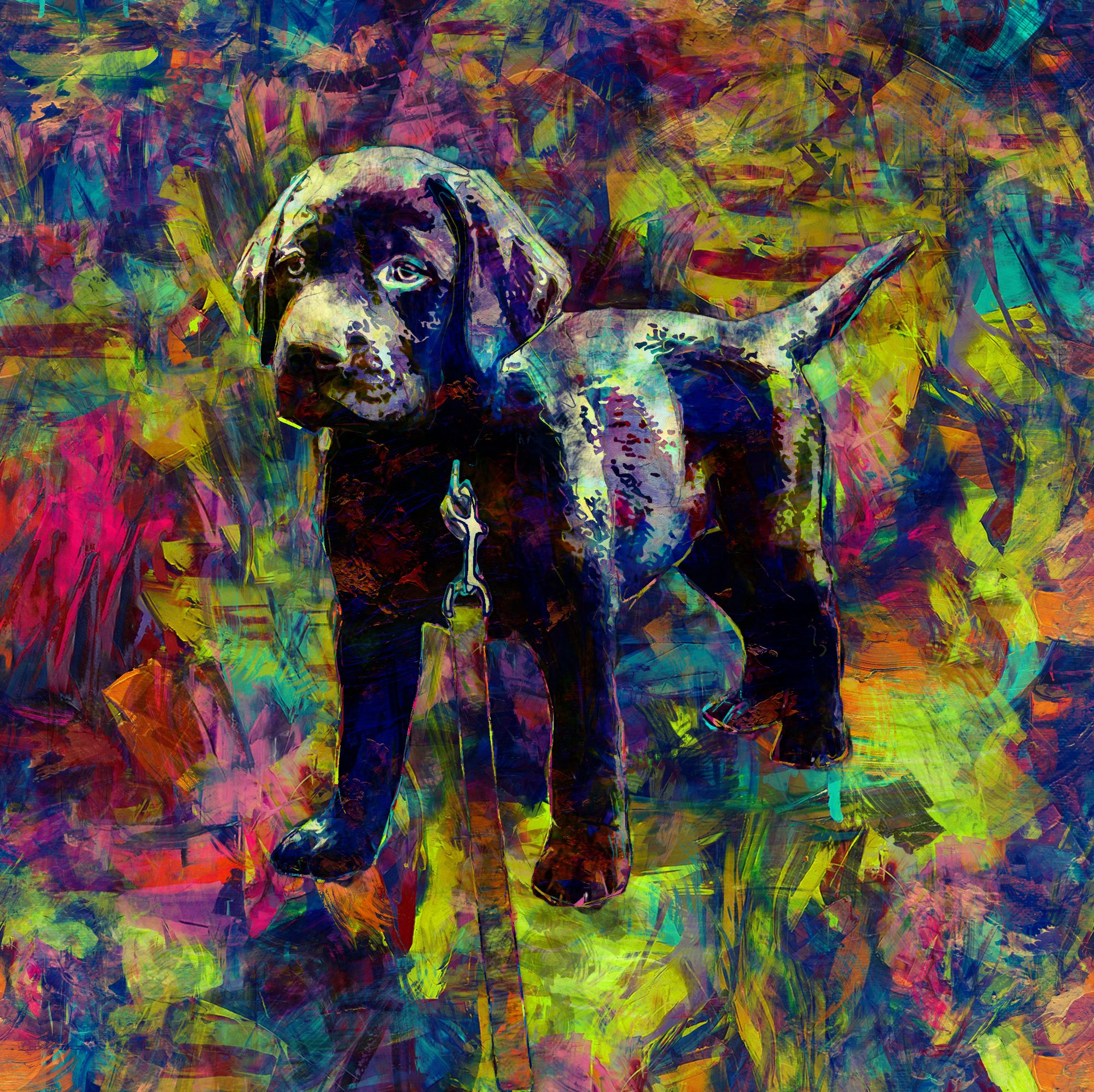 Custom Dog Art For My Friend Of Her Puppy Amos Abstract
