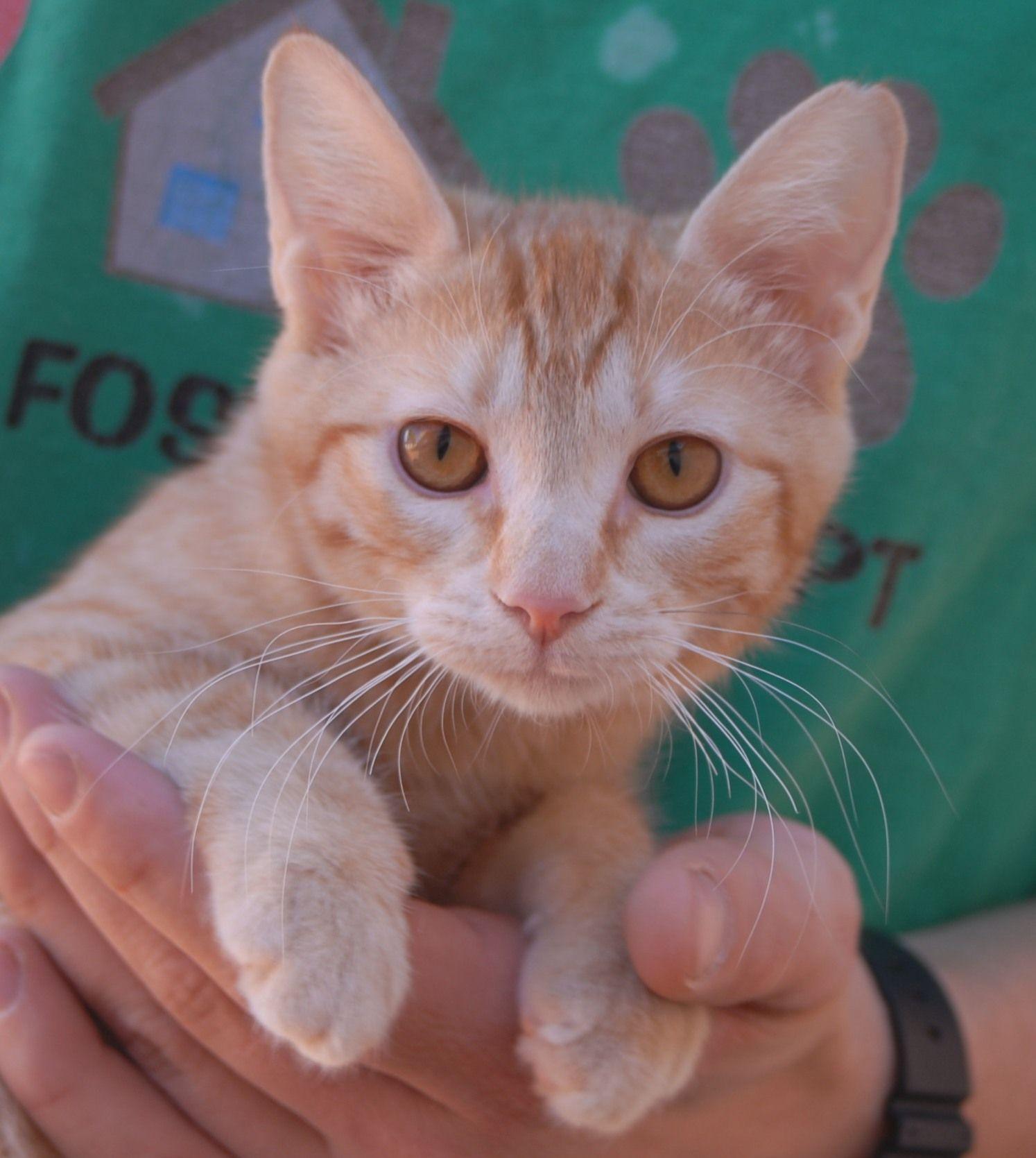 Spca Kittens Buffalo Ny - Best Cat And Kitten Image And