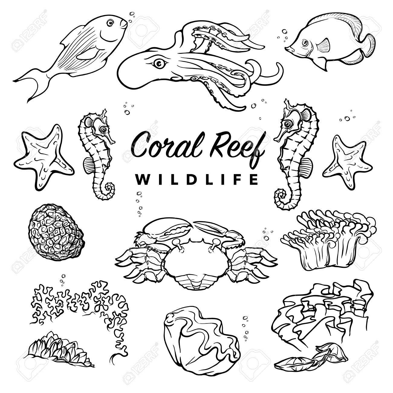 Coral Reef Inhabitants Sea Creatures Coral Reef Drawing Sea Creatures Drawing Coral Reef