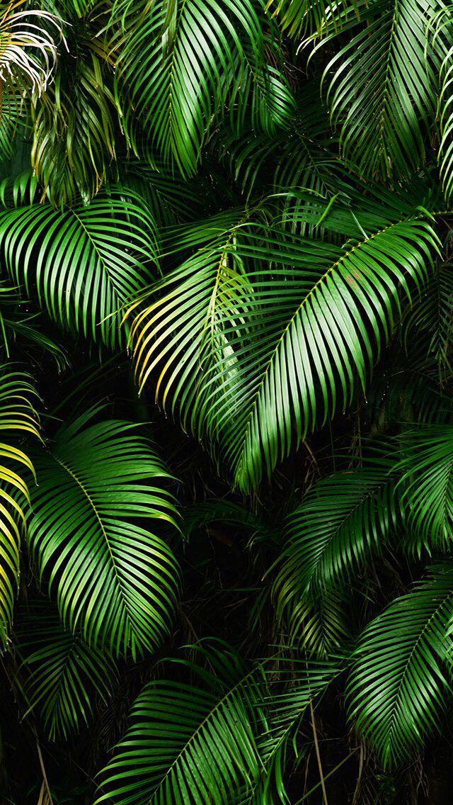 Green wallpaper, Iphone background