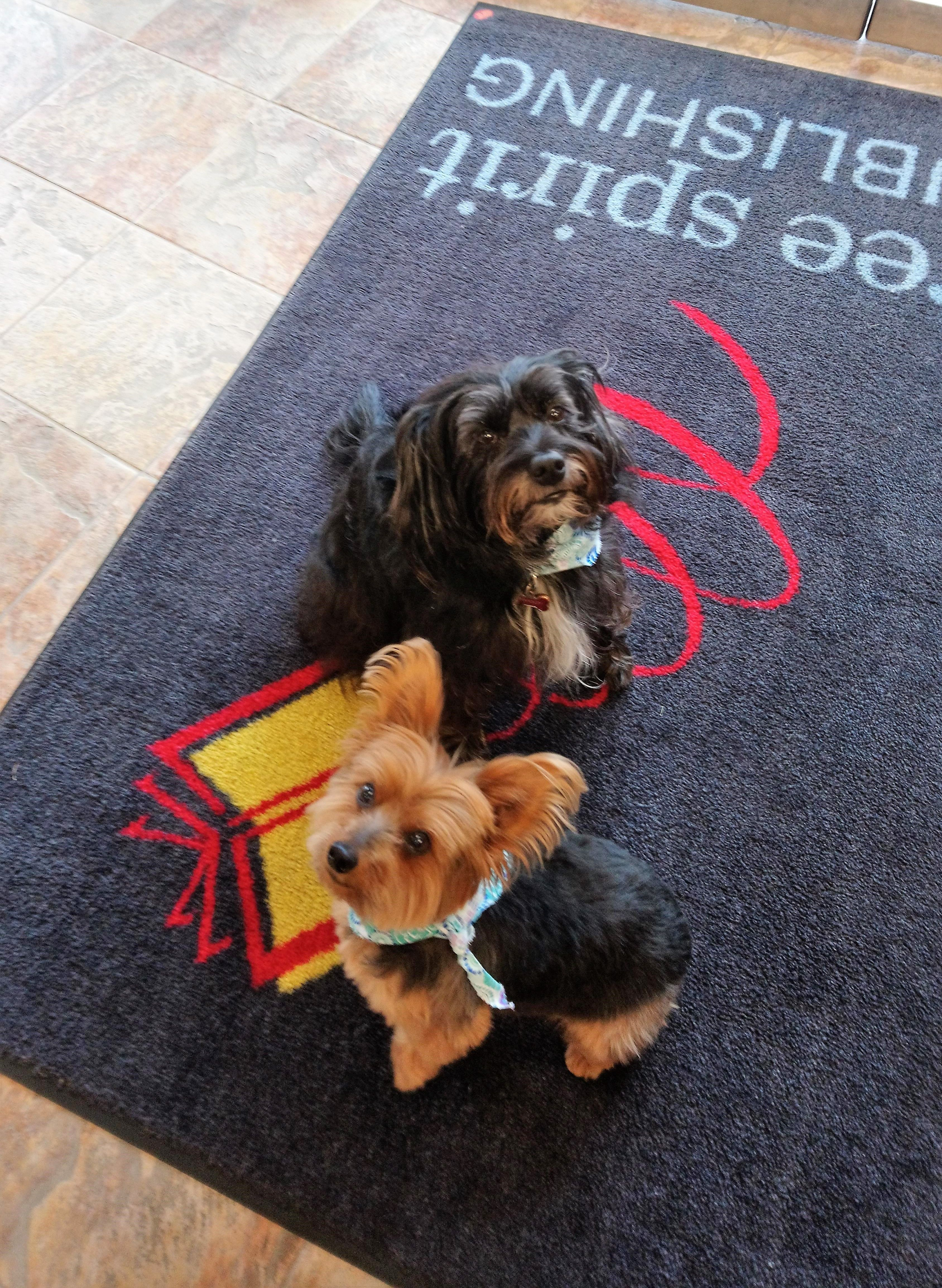 Free Spirit Office Dogs Twiggy And Violet Are Back From Their Spa Day At The Groomer Good Girls Office Dog Free Spirit Spirit