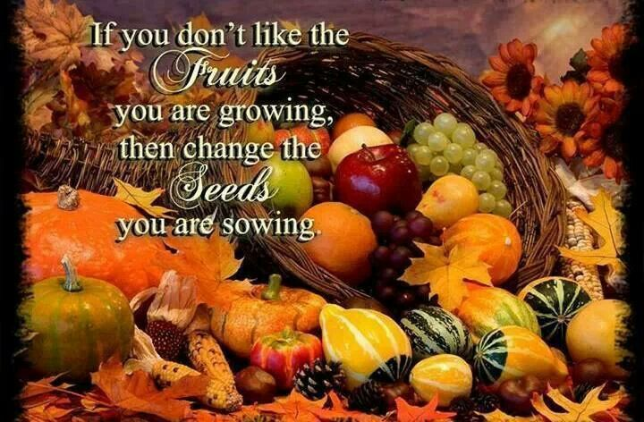 Fruits/Seeds