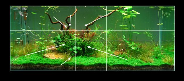Delightful Aquascape 13