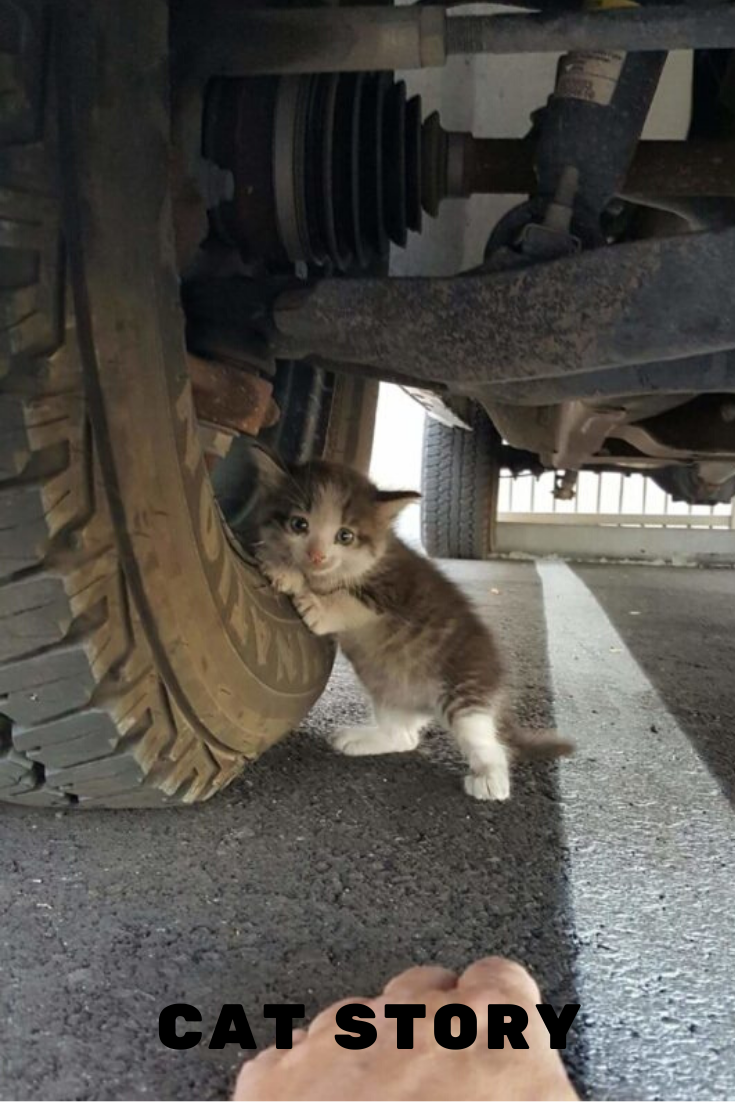 Scared Kitten Hiding Beneath A Truck Finds A Home In 2020 Kitten Baby Cats Crazy Cats