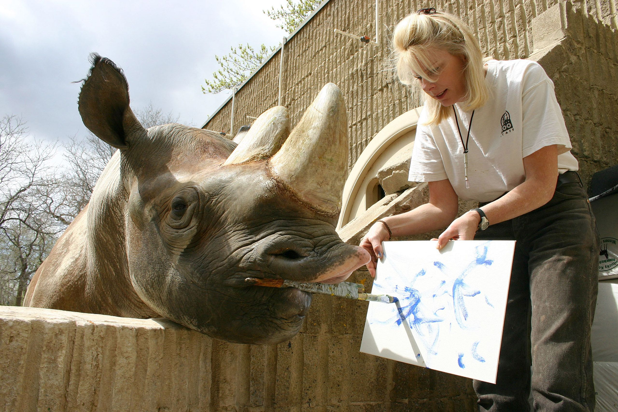 Rhino That Could Paint Dies at Denver Zoo Denver zoo