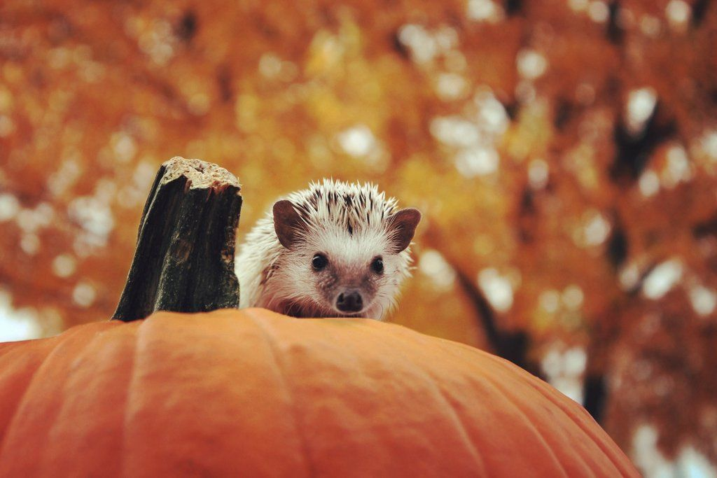 Bitrates Autumn Blog Autumn Animals Cute Baby Animals Cute Hedgehog