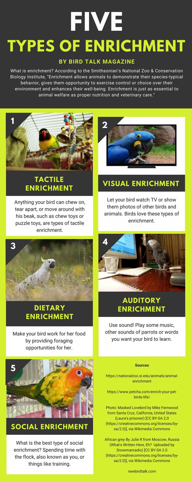 Parrot Enrichment Conservation Biology Parrot Veterinary Care