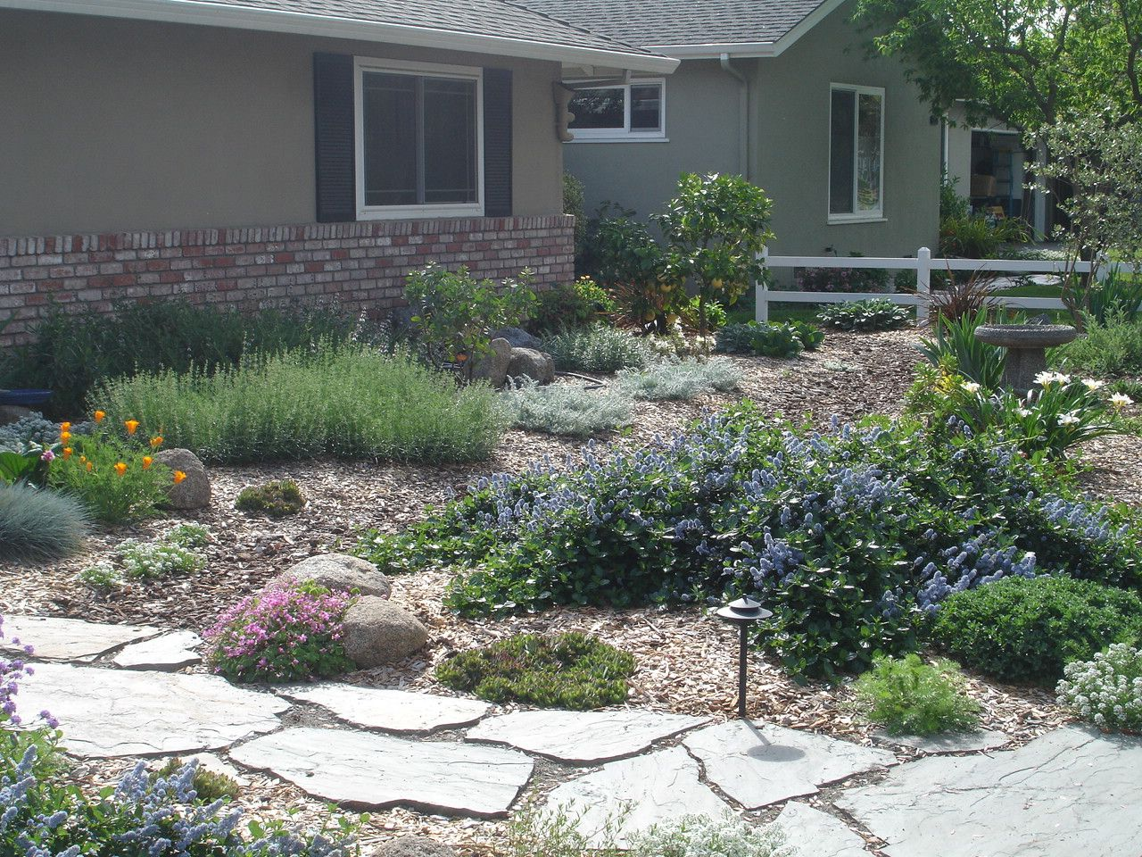 Luscious plantings in place of a lawn very green lawn for Landscape design san jose