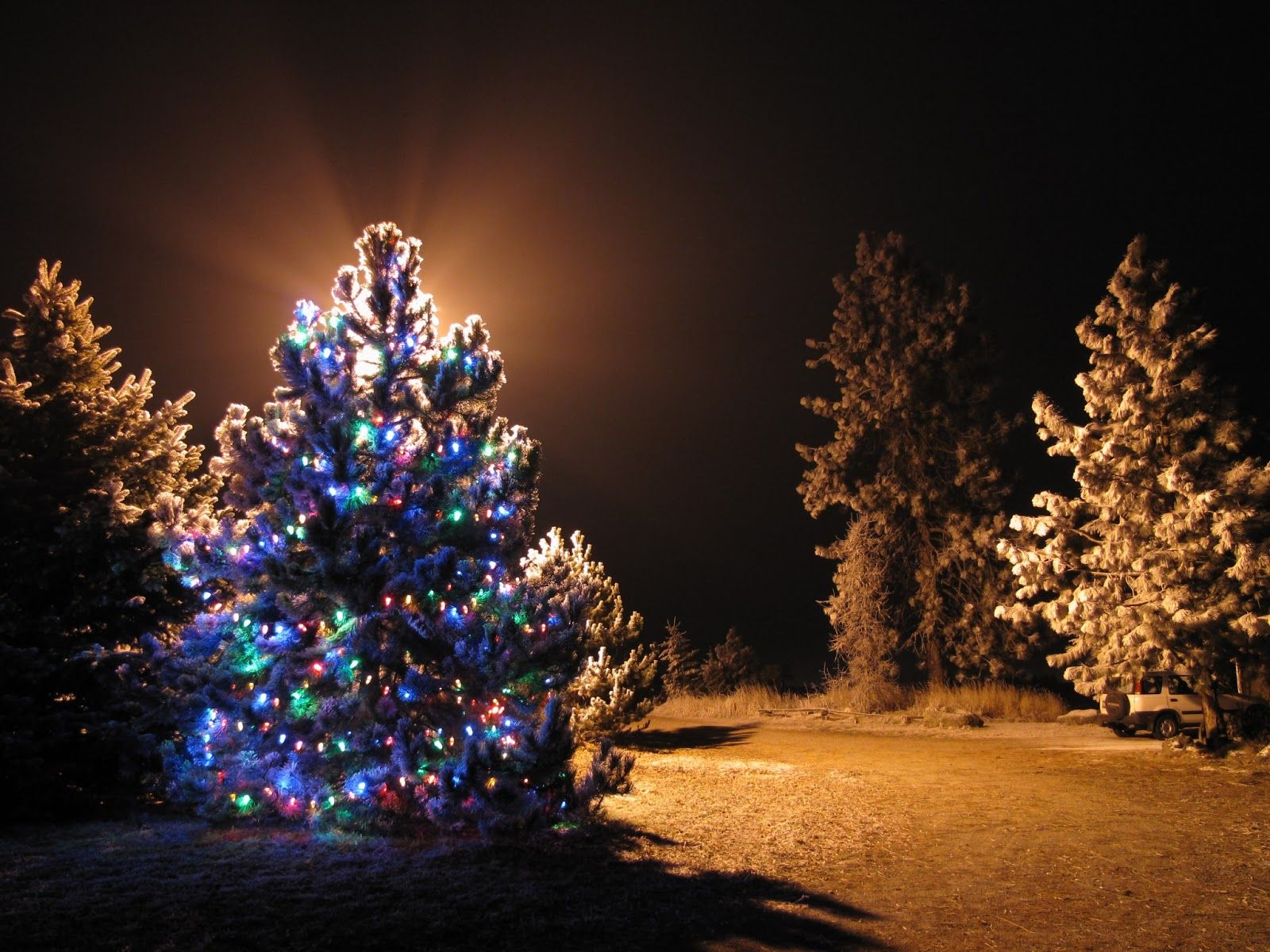 This post contains some of the best collection of outdoor this post contains some of the best collection of outdoor christmas tree images mozeypictures Choice Image