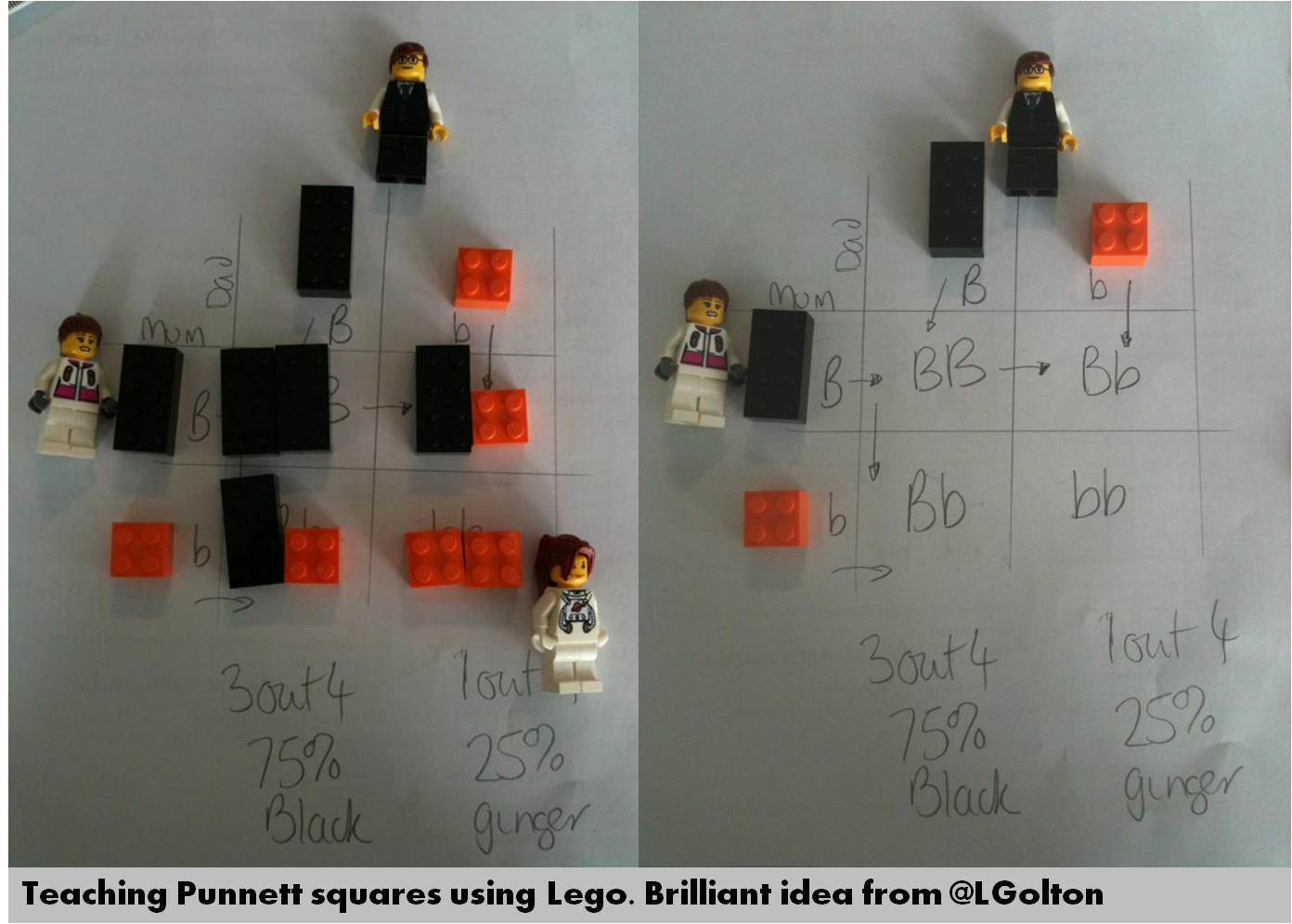 Teaching Punnett Squares Using Lego Brilliant Idea