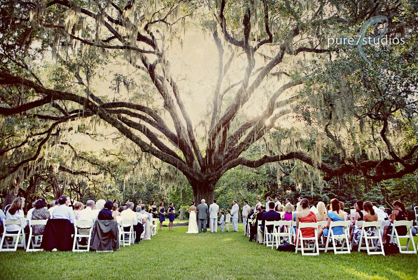 wedding under the wedding tree in Eden Gardenslook at the