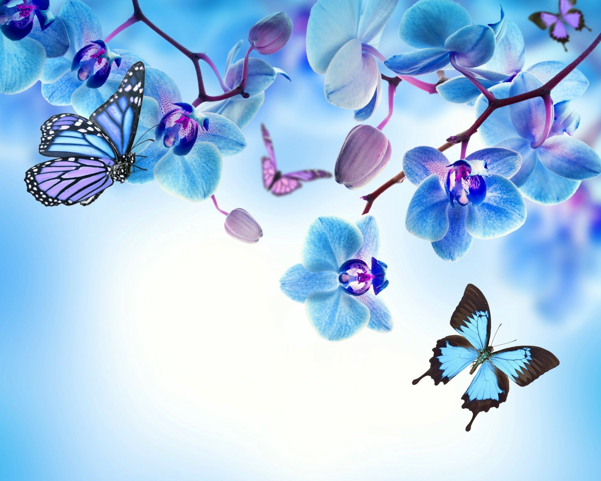 Butterfly And Flower Wall Stickers Orchid Blue Flowers Beautiful Butterflies Orchid Flower