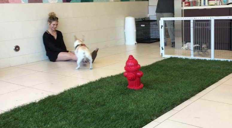 Find The Best Small Dog Daycare Near Me   petswithlove us