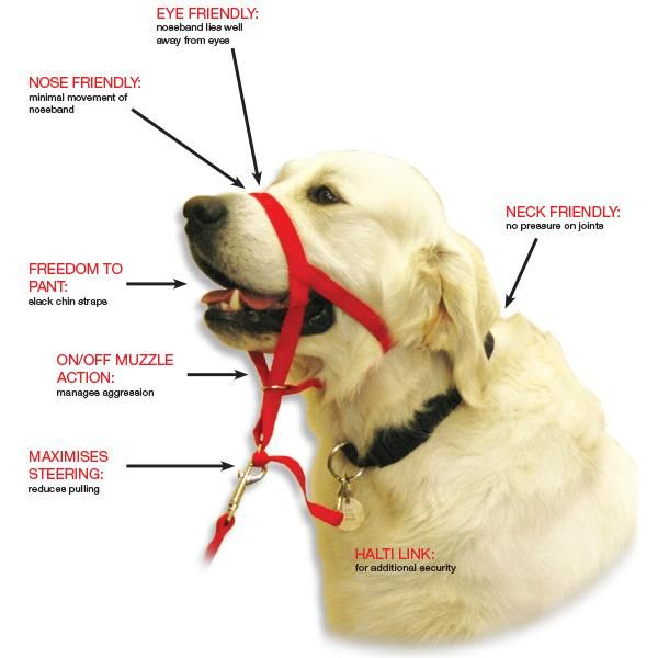 Halti Head Collar Features This Is A Must Have Tool For Dogs