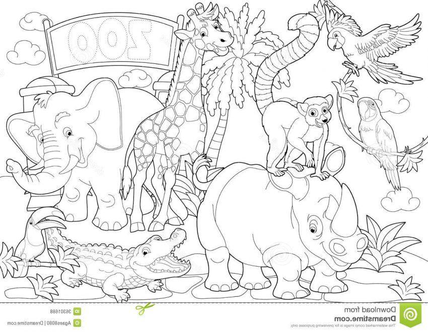 Zoo Entrance Coloring Pages Animais Pintar Colorir