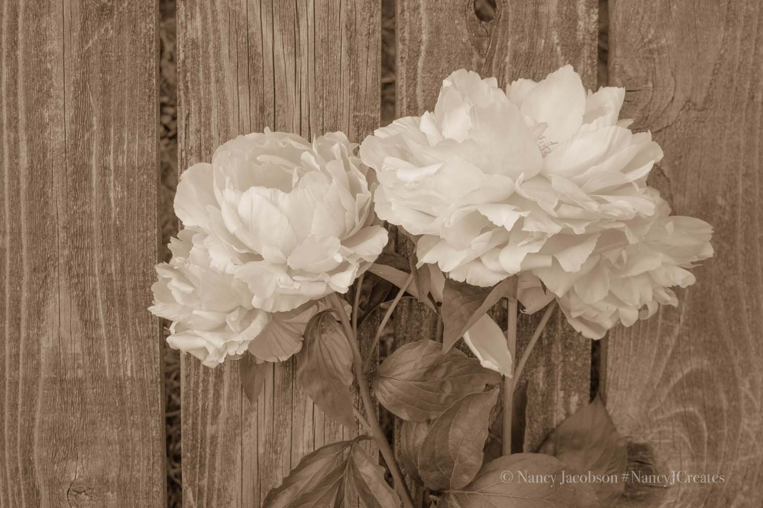 Rustic Floral Wall Art Black And White Peony Photo Etsy Rustic Floral Wall Art Floral Wall Art Black And White Wall Art