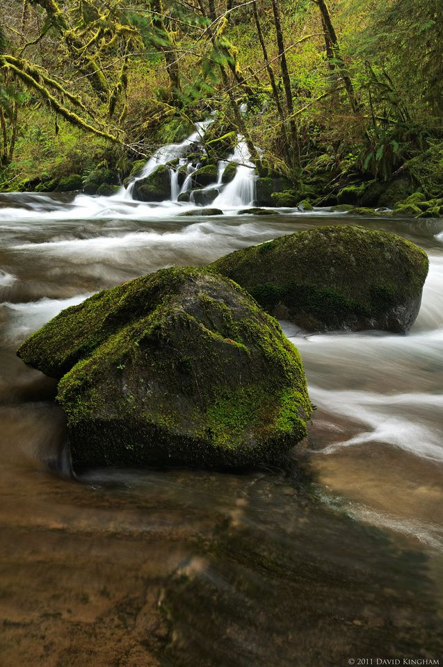 Sweet Creek Moss | Mother Nature at Her Finest ...