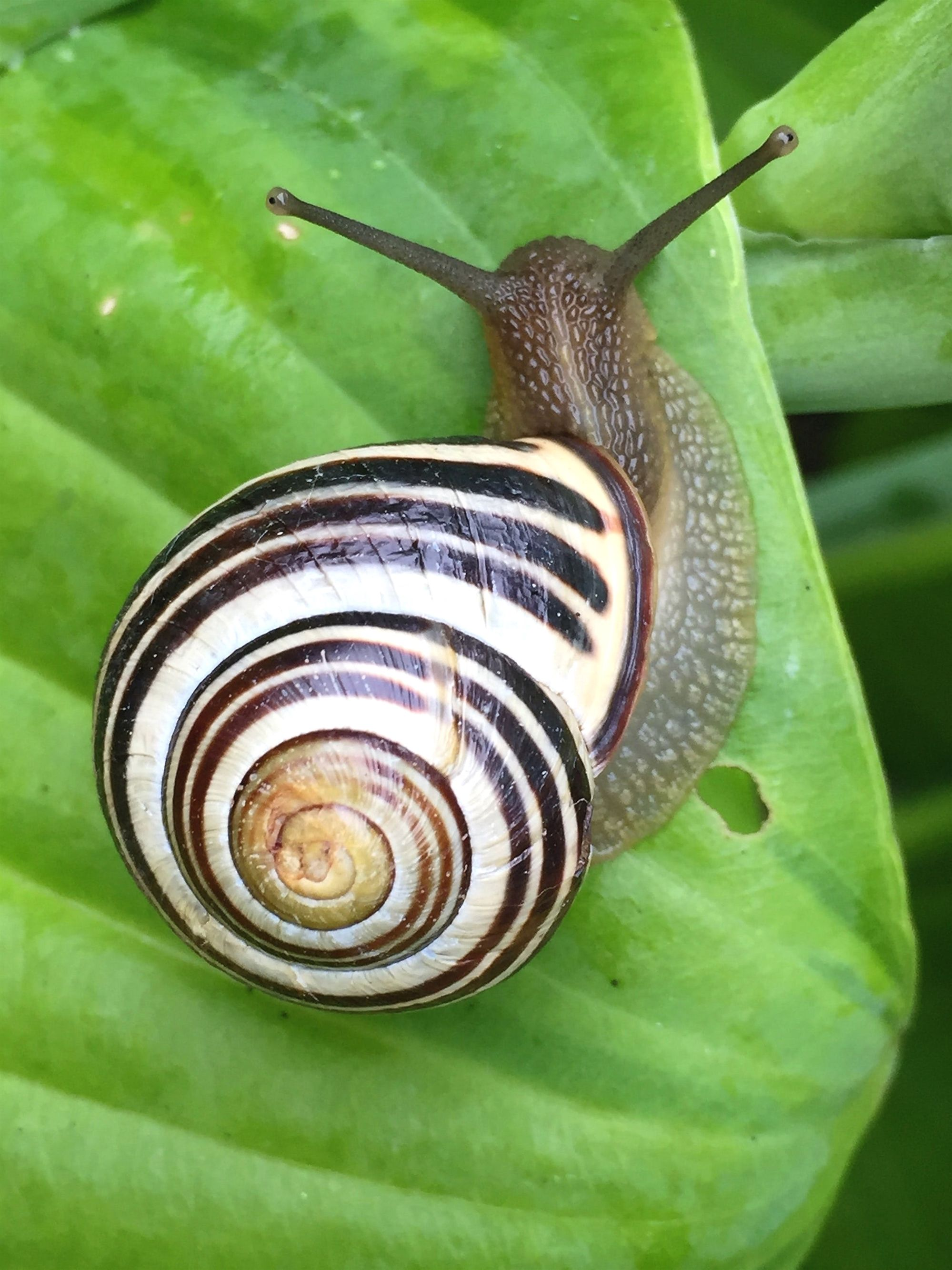 Expert Advice About Organic Gardening And You Snail