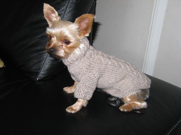 схемы вязание для маленьких собак