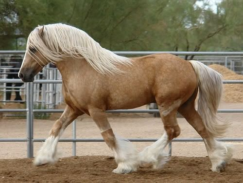 Irish Draft Horse - absolutely adore these horses. Their size and ...