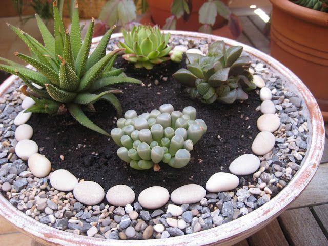 Malena Valcárcel original Art Pequeño jardín Zen con suculentas
