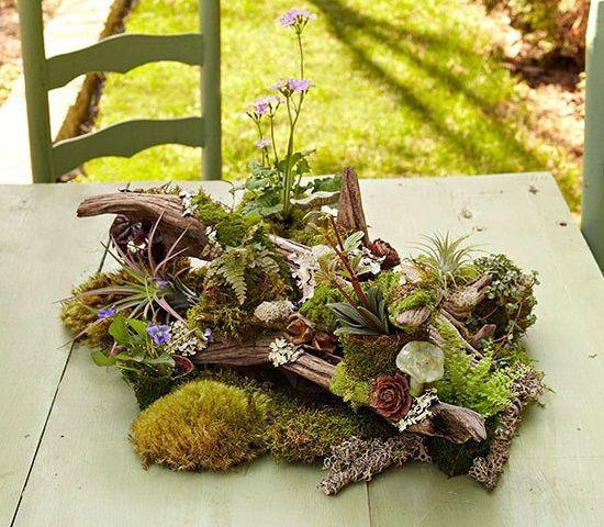 38 id es pour faire un petit jardin d 39 int rieur jardin d 39 int rieur pinterest jardinage. Black Bedroom Furniture Sets. Home Design Ideas