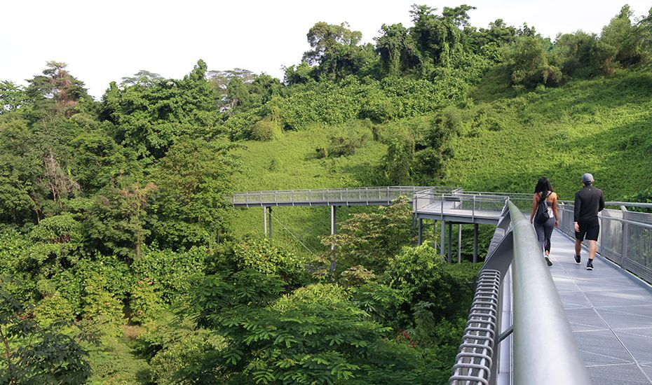 Hiking In Singapore 17 Essential Walking Trails To Get Your Trek On Singapore Sights Singapore Hiking